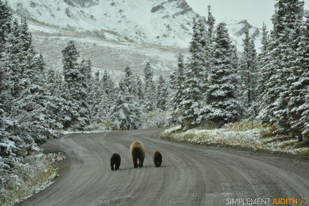 famille grizzli, Alaska