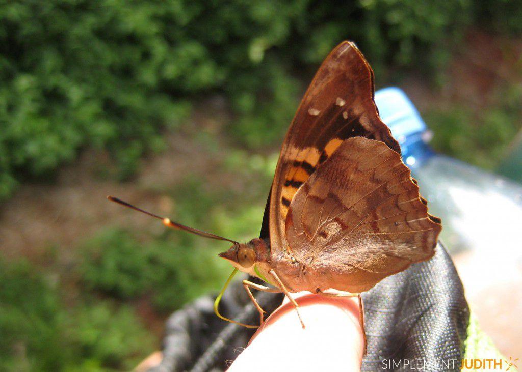 papillon doigt 1 Iguazu